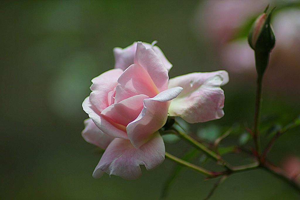 זהבה רוז- טיפול באכילה רגשית